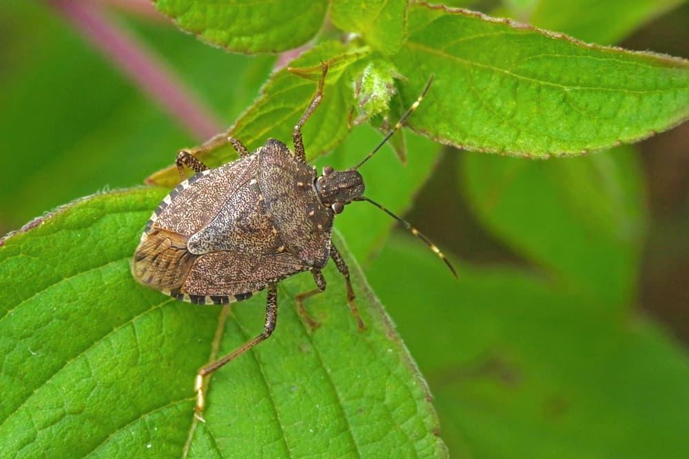 Natural pest control strategies